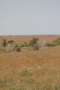 The Willa Cather Memorial Prairie consists of 608 acres of never-been-plowed native prairie. The foundation is returning this land to its pre-1900 conditions.