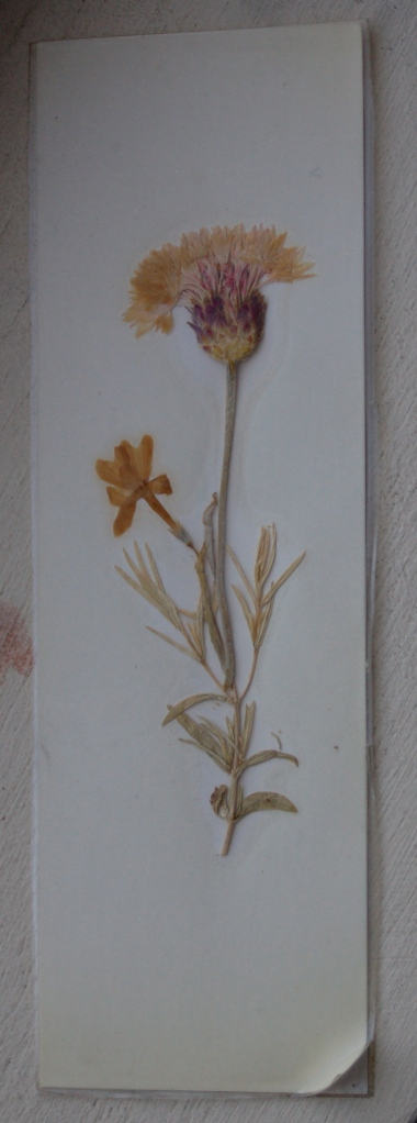 handmade pressed flower bookmark